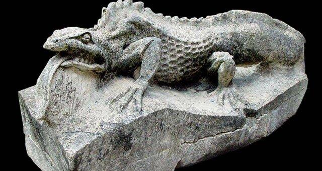 Пещерная саламандра ни разу не пошевелилась за 7 лет