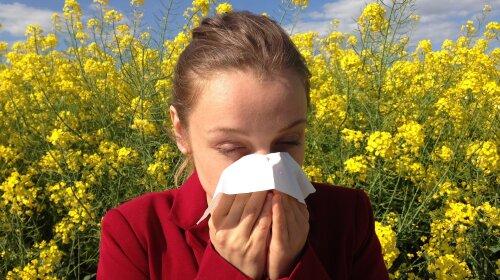 """""""Апчхи!"""": медики назвали основные симптомы и меры профилактики аллергии"""