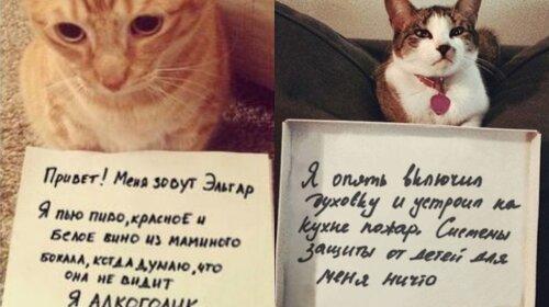 Усатые хулиганы: котики, которые знают толк в шалостях (ФОТО)