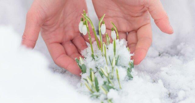 Домашние цветы для клумбы, которые нужно сеять в январе