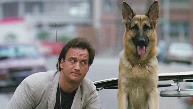 Пушистые легенды: ТОП-5 популярных собак из фильмов