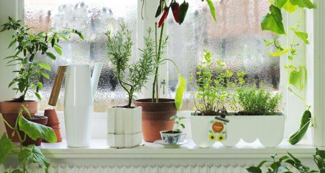 комнатные цветы, которые нейтрализуют токсины