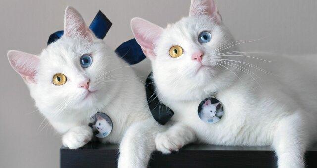 Уникальные породы кошек: самые редкие кошки