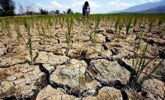 В ООН предрекли начало большой засухи на планете: голодать будут все