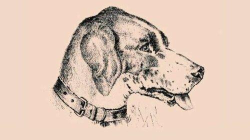 Тест-загадка з собакою