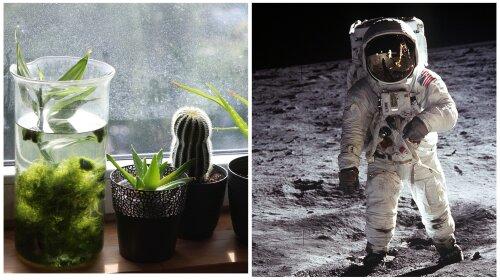 Доведено космічним агенством НАСА: ТОП-15 кімнатних рослин, які дійсно очищають повітря