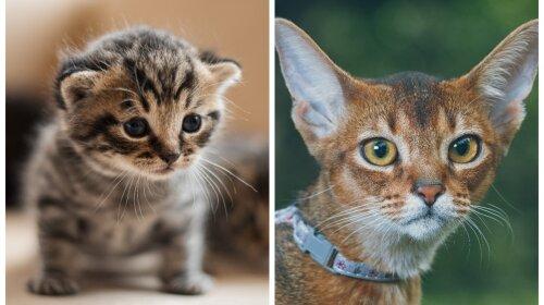 Большой кот или маленький котенок: выбери животное, а мы расскажем о лучших чертах твоего характера