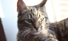 Кот сел на голову младенца и задушил его: в Винницкой области произошел несчастный случай