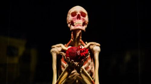 Высушенные скелеты, «живое» сердце и мозги: уникальная выставка человеческих тел устраивает «Ночь в музее» в Киеве