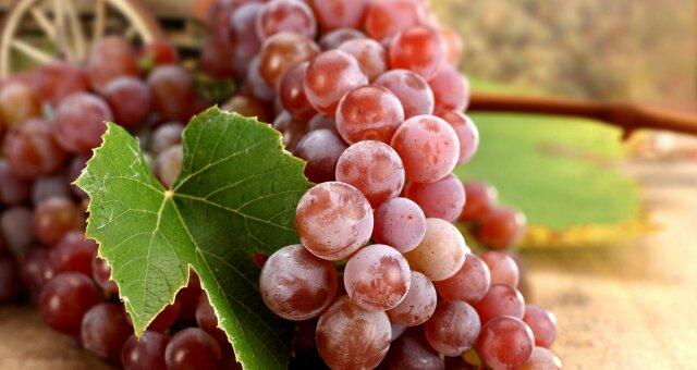 Красный виноград