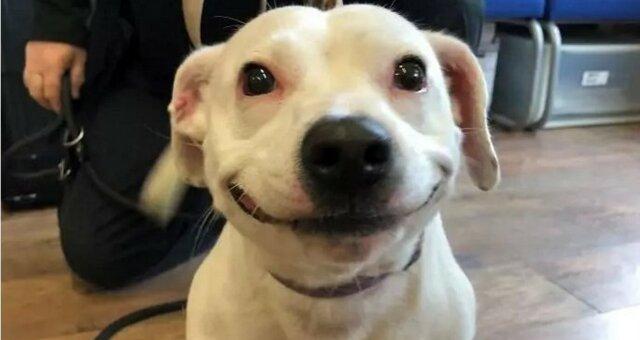 У Мережі знайдена сама усміхнена собака