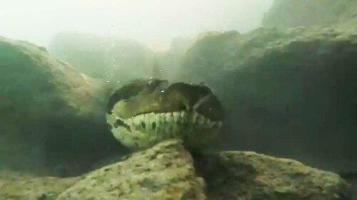 В Бразилии дайверы встретили под водой огромную анаконду (ФОТО)
