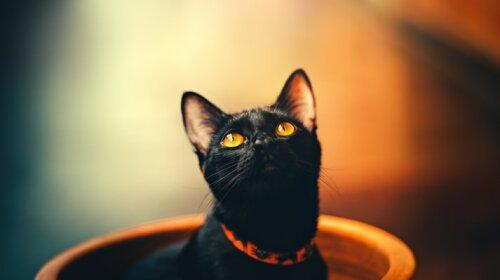 """""""Жан-Клод Ван Мяу"""": Мережу розсмішив кіт, який сів на шпагат"""