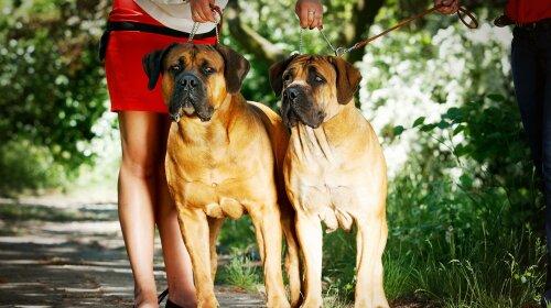 Запрещенные породы собак