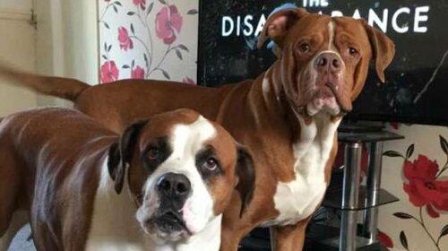 В Великобритании мать троих детей погибла из-за собственных собак