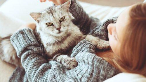 породи кішок, які лікують хвороби