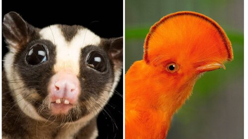 Найнезвичайніші тварини світу: такого ти точно ще не бачила