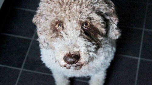 Екзотичні собаки: химерні породи собак
