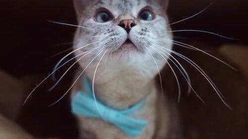 Знакомьтесь, это Нала, самая популярная кошка в мире! (фото)