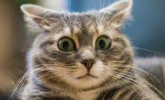 Котенок, застуканный в нелепой позе, стал звездой интернета