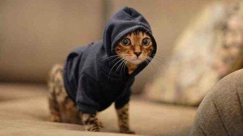 Мимиметр зашкаливает: котики учат нас утепляться