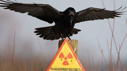 Співробітники Чорнобильського заповідника показали фото рідкісного тварини