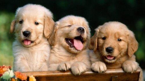 Породы собак, которые поднимают настроение: их советуют заводить всем, кто болеет (ФОТО)