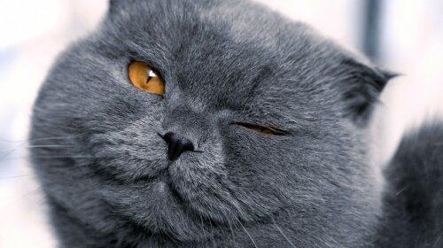 Вгодований кіт сів у людську позу, щоб подивитися мультик: відео підкорило мережу