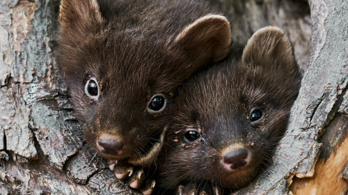 Топ-8: необычайно умилительные малыши диких животных (фото)