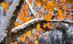 Когда в Украине начнутся первые заморозки: синоптики дали прогноз