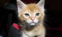 Сеть рассмешил забавный танец рыжего котенка (фото и видео)
