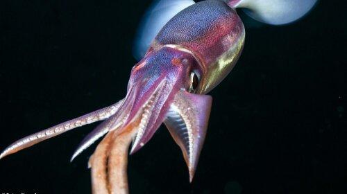 10 «инопланетных» существ со дна Тихого океана: потрясающие кадры