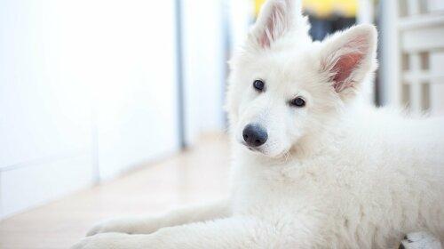 Нові породи собак