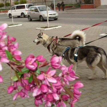 Photo shared by Оля Дрозд on May 04, 2020 tagging @clutch.ua. Image may contain: dog, flower and outdoor