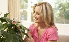 Жіночі кімнатні квіти по феншуй