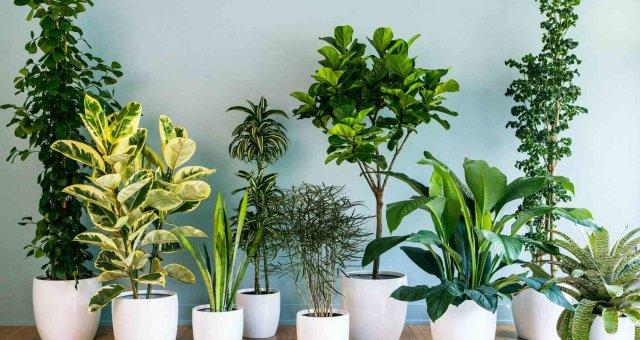 Ученые выяснили, очищают ли комнатные растения воздух