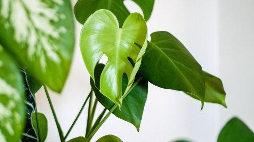 Комнатные цветы, которые притягивают в дом здоровье по феншуй