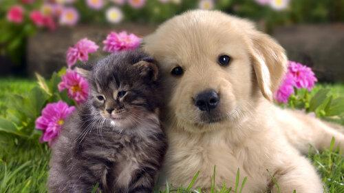 Кішка і собака дружать
