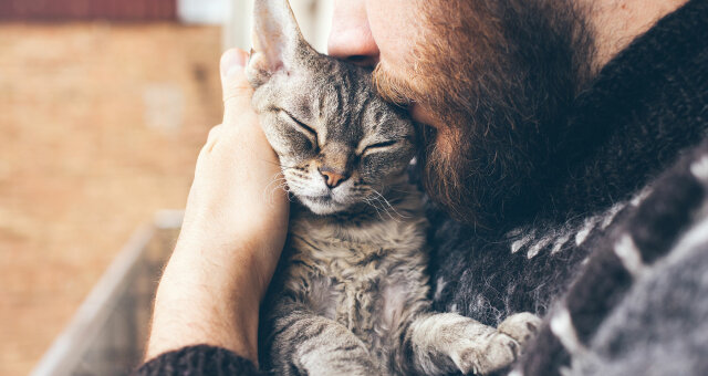 Как кошки могут любить человека: фото