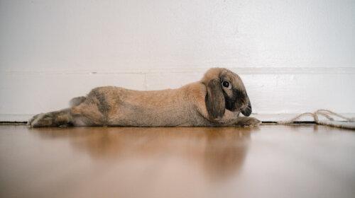 Милых фото много не бывает: лучшая подборка трогательных крольчат