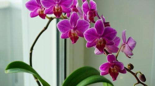 Советы бывалой хозяйки: Как ухаживать за орхидеей, чтобы она буйно цвела  круглый год
