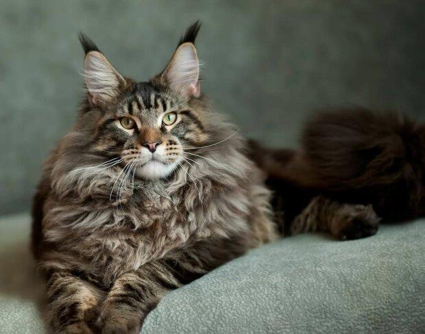 Есть аллергия на персидских кошек thumbnail