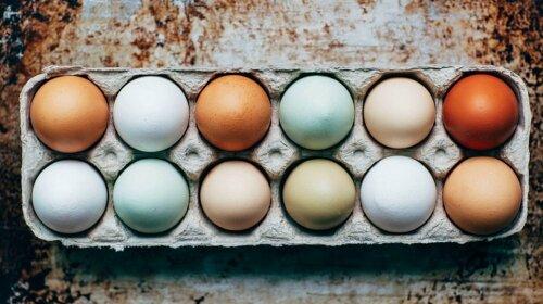 Белые или коричневые? Эксперт рассказал, какие яйца стоит покупать и почему