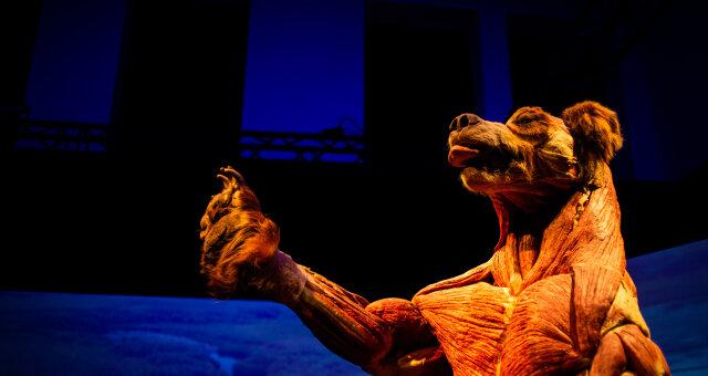 И у меня на это пять причин: Гид по выставке тел «Всесвіт тіла: Всередині тварин»