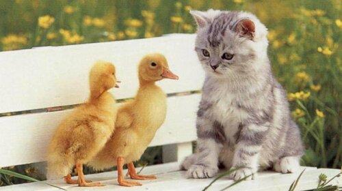 Цыпленок или котенок: выбери животное-детеныша и узнай, насколько ты романтичная натура