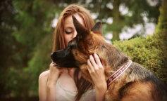 найслухняніші породи собак