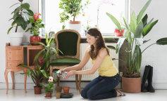 Комнатные цветы, которые заменяют кондиционер