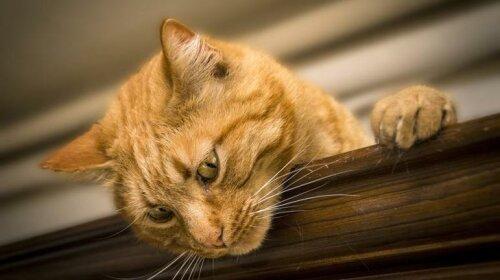 Кумедна реакція кота на спів господаря підірвала Мережу