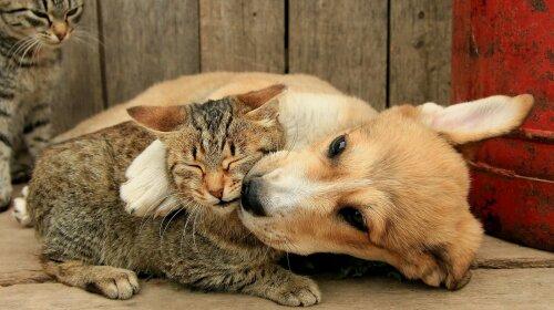 Сеть насмешил котенок, который пытался подружиться с большой собакой (видео)