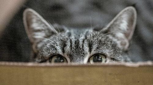 Кошки и коробки: откуда такая любовь к коробкам?